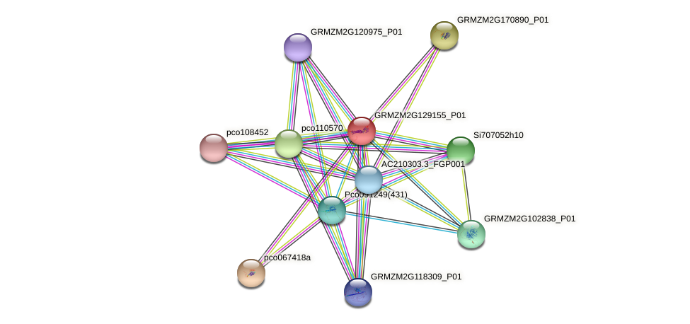 GRMZM2G129155_P01 protein (Zea mays) - STRING interaction network