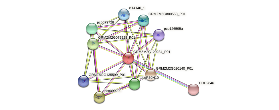 GRMZM2G129234_P01 protein (Zea mays) - STRING interaction network