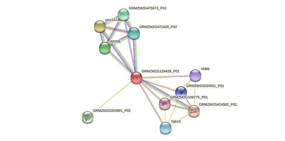 GRMZM2G129428_P01 protein (Zea mays) - STRING interaction network