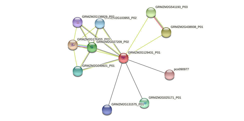 Zm.96908 protein (Zea mays) - STRING interaction network