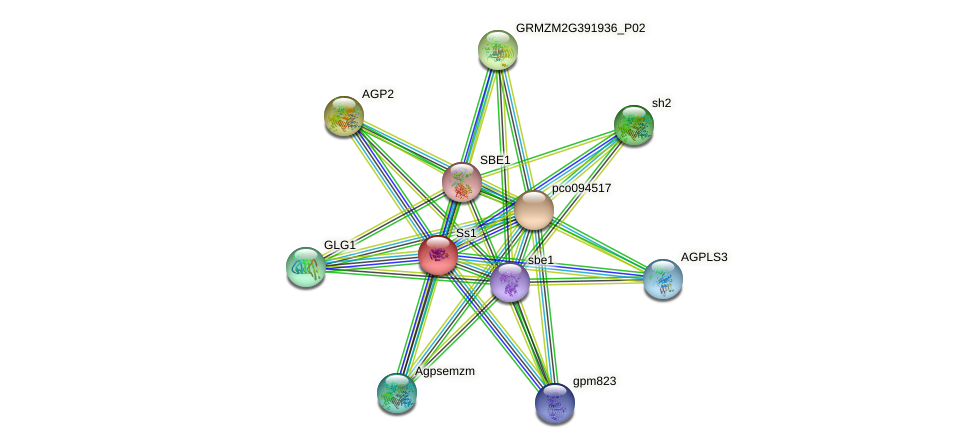 ss1 protein (Zea mays) - STRING interaction network