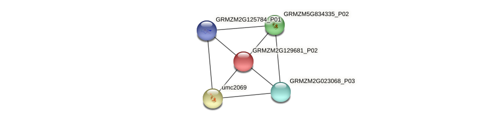 GRMZM2G129681_P02 protein (Zea mays) - STRING interaction network