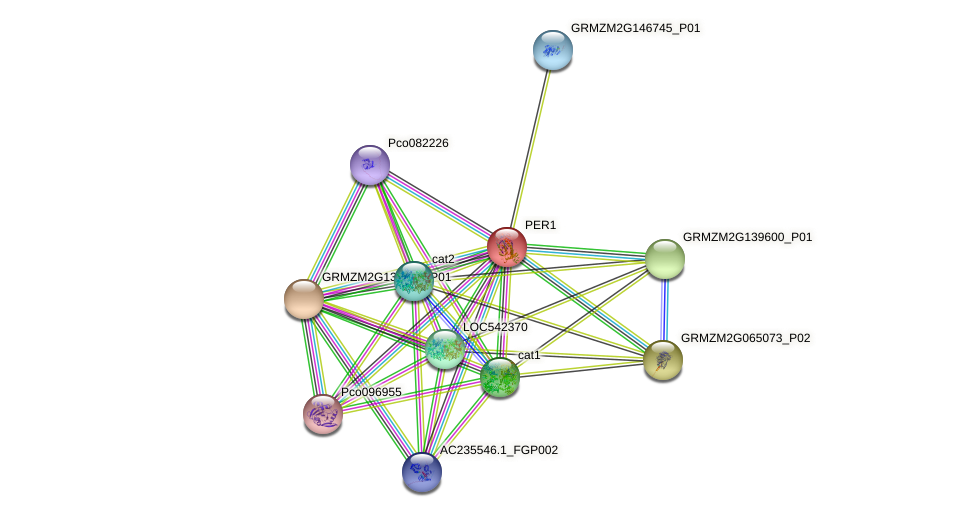 PER-1 protein (Zea mays) - STRING interaction network