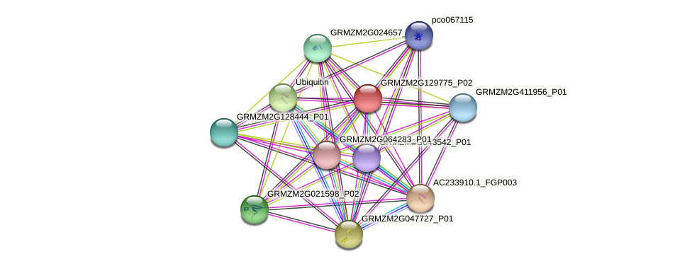 GRMZM2G129775_P01 protein (Zea mays) - STRING interaction network