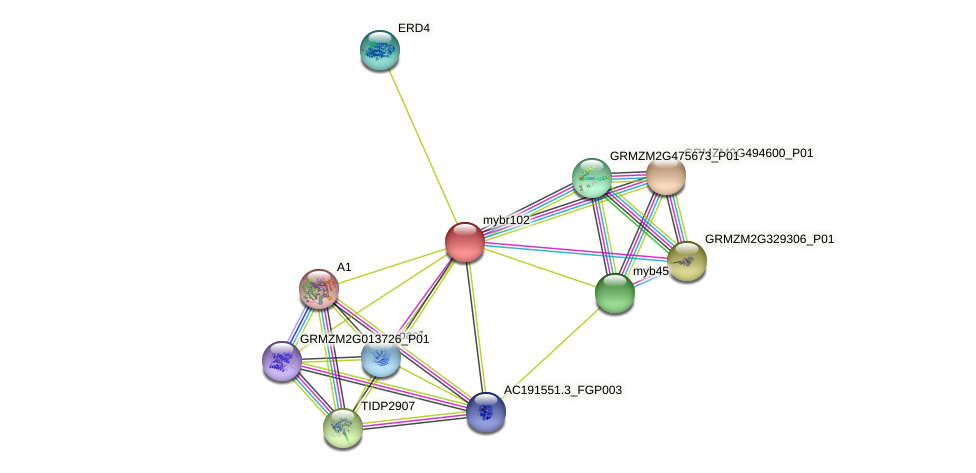 MYBR102 protein (Zea mays) - STRING interaction network