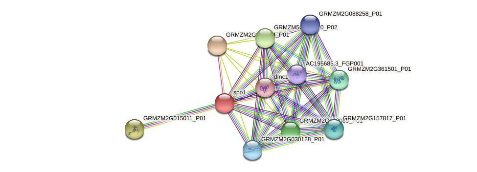 GRMZM2G129913_P03 protein (Zea mays) - STRING interaction network