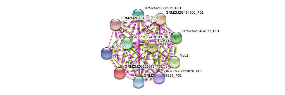 GRMZM2G129979_P01 protein (Zea mays) - STRING interaction network