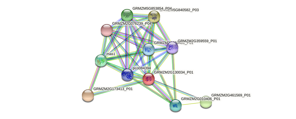 GRMZM2G130034_P01 protein (Zea mays) - STRING interaction network