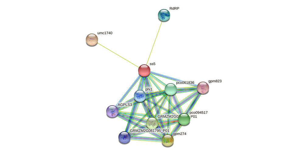 GRMZM2G130043_P01 protein (Zea mays) - STRING interaction network