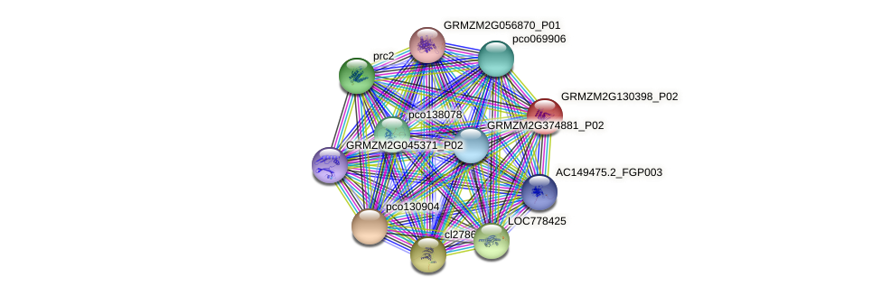 GRMZM2G130398_P02 protein (Zea mays) - STRING interaction network