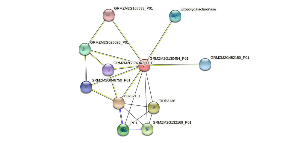 GRMZM2G130454_P01 protein (Zea mays) - STRING interaction network