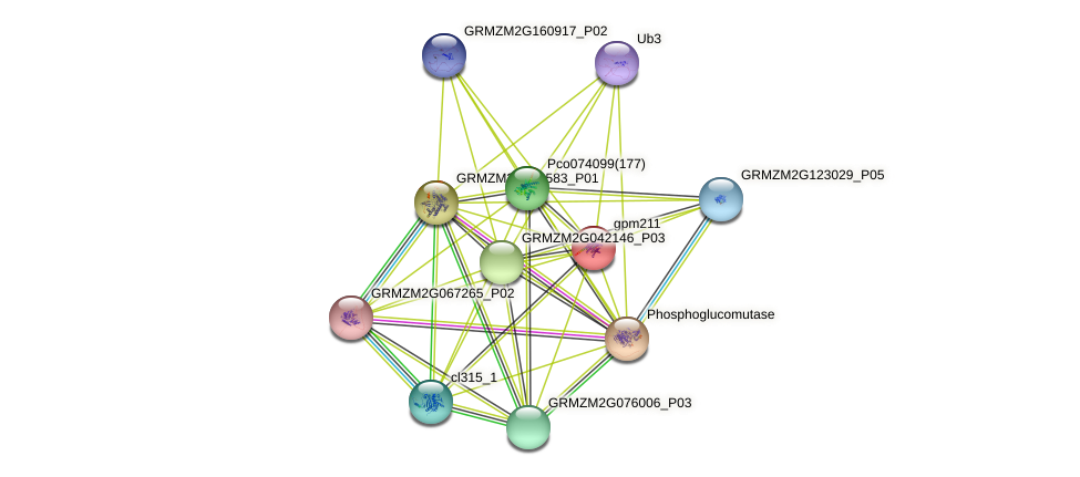 gpm211 protein (Zea mays) - STRING interaction network