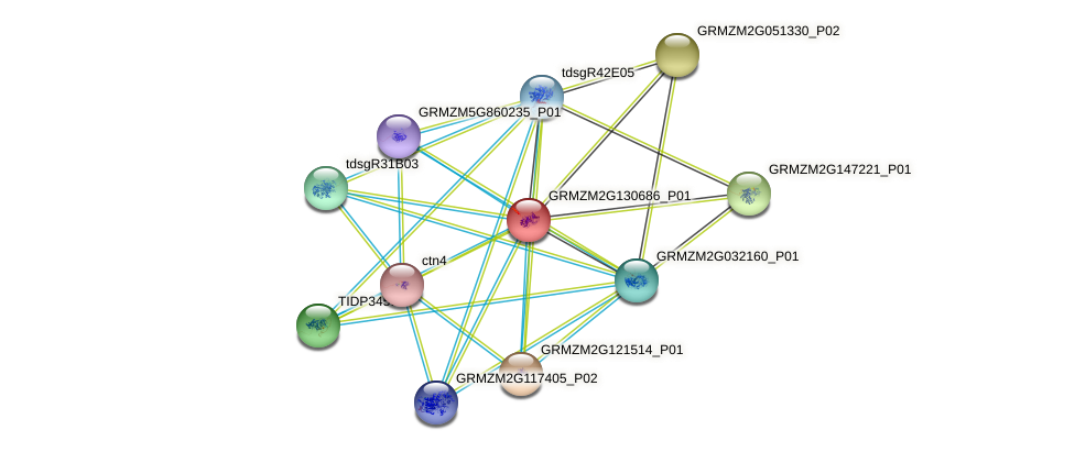 Zm.64700 protein (Zea mays) - STRING interaction network