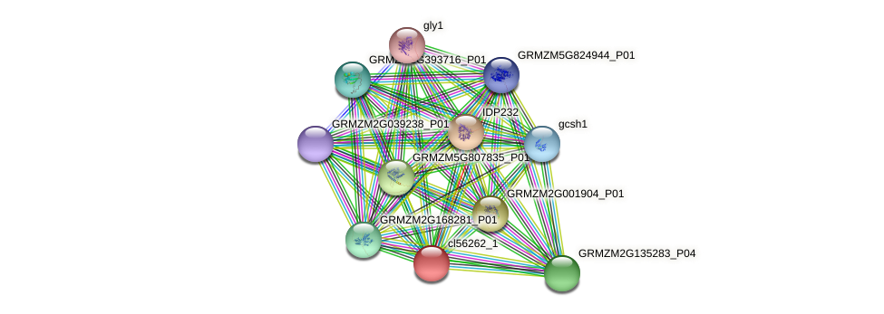 cl56262_1 protein (Zea mays) - STRING interaction network