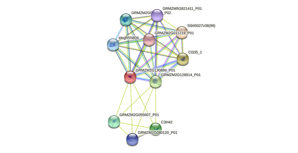 GRMZM2G130889_P01 protein (Zea mays) - STRING interaction network