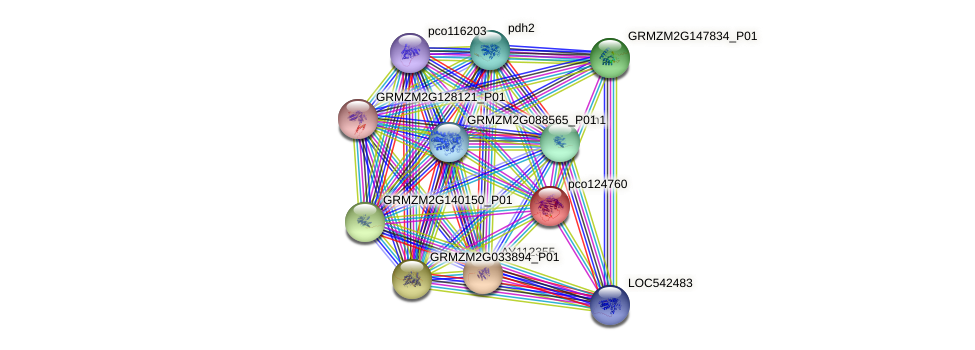 Orphan27 protein (Zea mays) - STRING interaction network