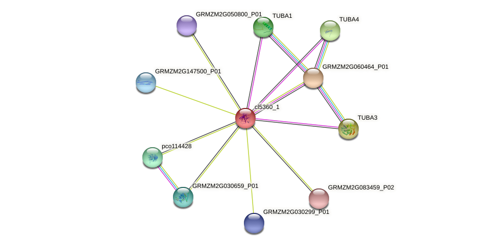 cl5360_1 protein (Zea mays) - STRING interaction network