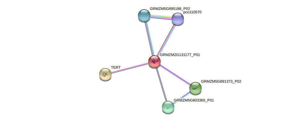 Zm.22443 protein (Zea mays) - STRING interaction network