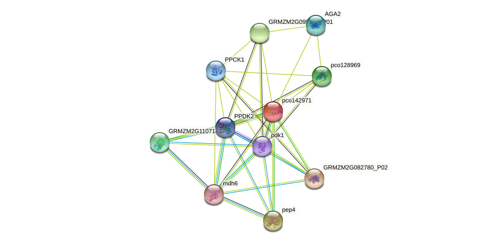 PDRP1 protein (Zea mays) - STRING interaction network