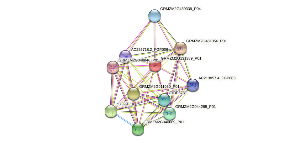 GRMZM2G131389_P01 protein (Zea mays) - STRING interaction network