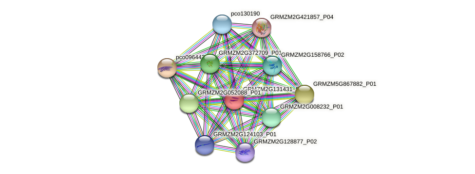 Zm.136567 protein (Zea mays) - STRING interaction network