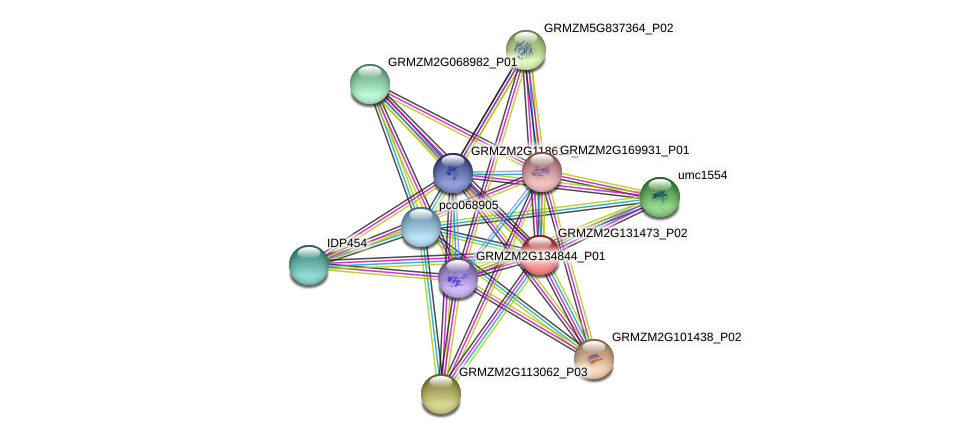 GRMZM2G131473_P02 protein (Zea mays) - STRING interaction network