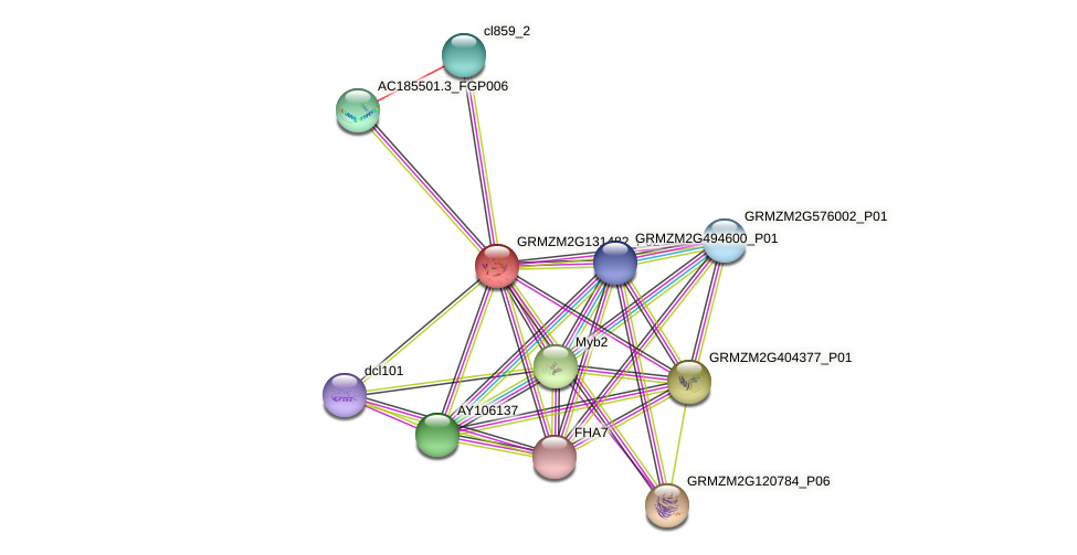 Zm.56182 protein (Zea mays) - STRING interaction network