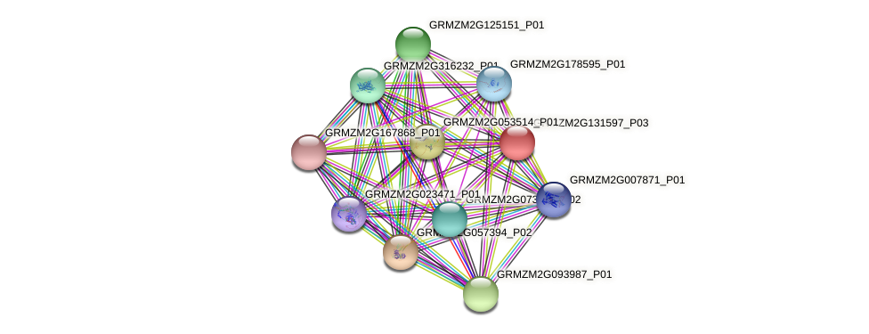GRMZM2G131597_P01 protein (Zea mays) - STRING interaction network