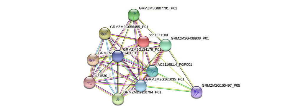 pco137118d protein (Zea mays) - STRING interaction network