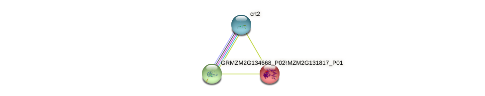 GRMZM2G131817_P01 protein (Zea mays) - STRING interaction network