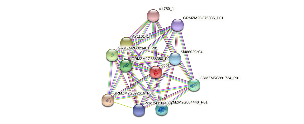 gbp1 protein (Zea mays) - STRING interaction network