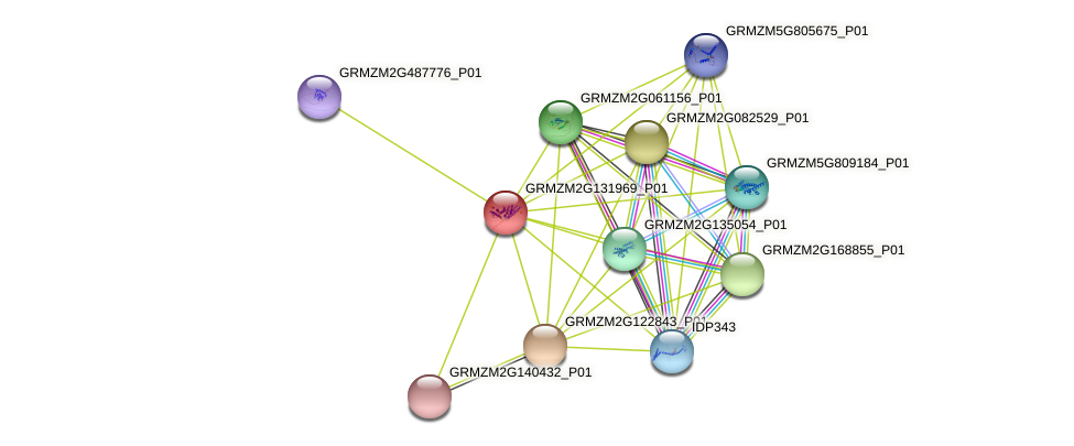 GRMZM2G131969_P01 protein (Zea mays) - STRING interaction network