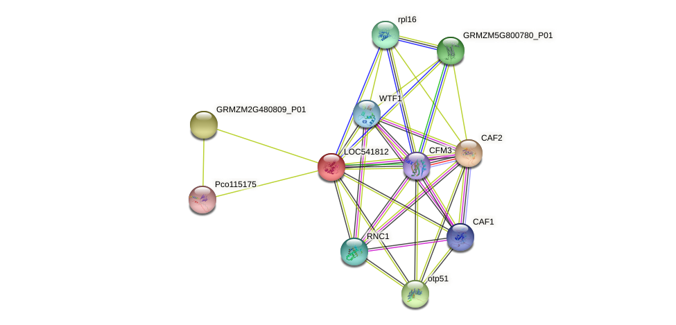 LOC541812 protein (Zea mays) - STRING interaction network