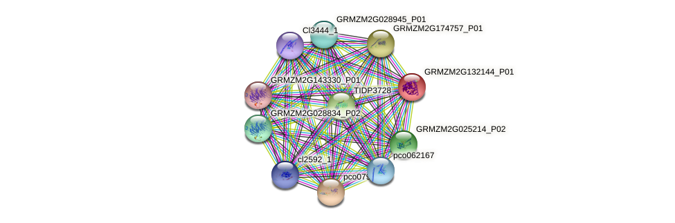 GRMZM2G132144_P01 protein (Zea mays) - STRING interaction network
