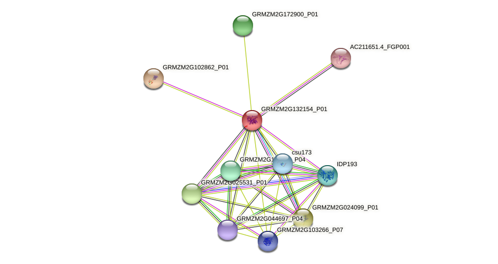GRMZM2G132154_P01 protein (Zea mays) - STRING interaction network