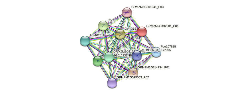 GRMZM2G132301_P01 protein (Zea mays) - STRING interaction network