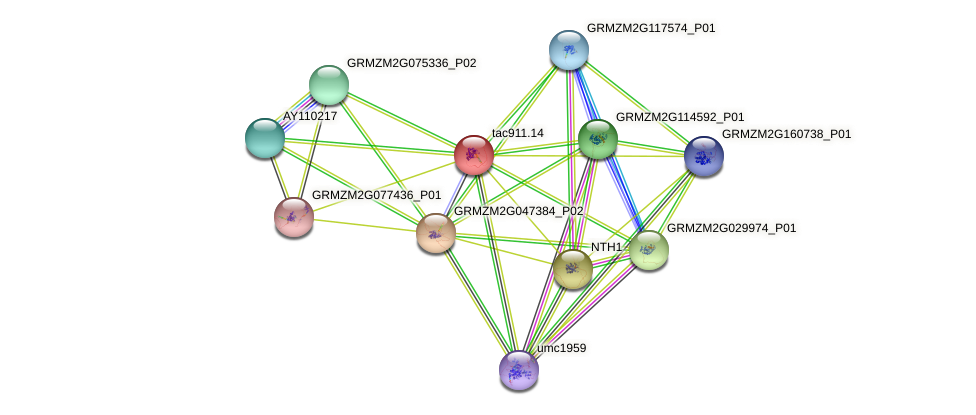 GRMZM2G132303_P01 protein (Zea mays) - STRING interaction network