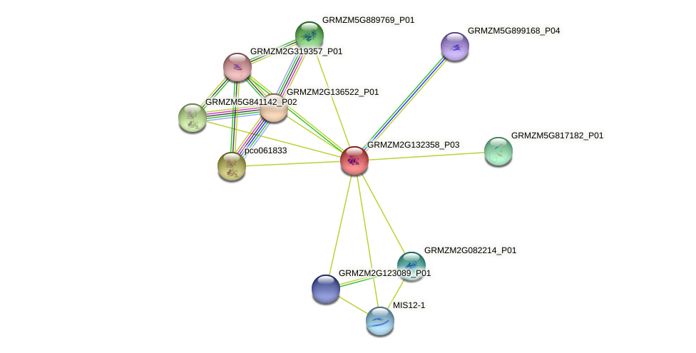 GRMZM2G132358_P03 protein (Zea mays) - STRING interaction network