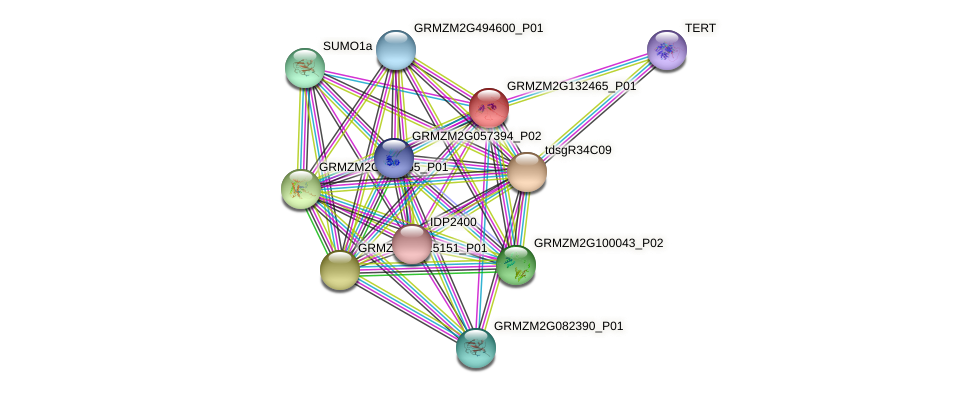 GRMZM2G132465_P01 protein (Zea mays) - STRING interaction network