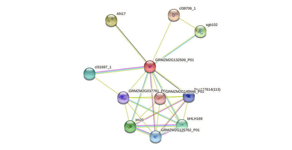 GRMZM2G132509_P01 protein (Zea mays) - STRING interaction network