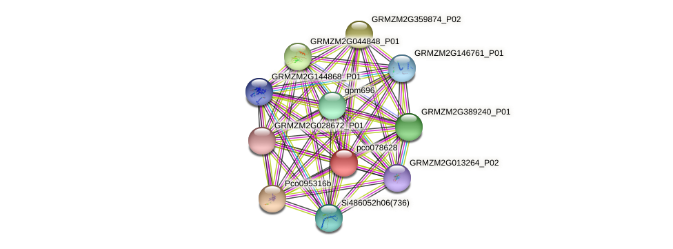 pco078628 protein (Zea mays) - STRING interaction network