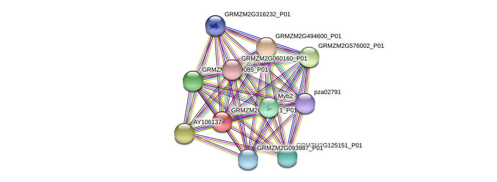 GRMZM2G132671_P01 protein (Zea mays) - STRING interaction network