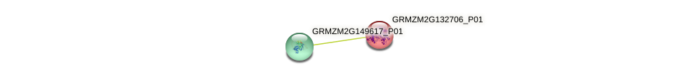 GRMZM2G132706_P01 protein (Zea mays) - STRING interaction network