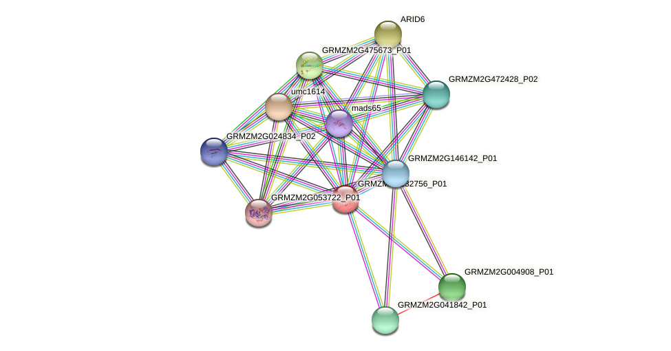 GRMZM2G132756_P01 protein (Zea mays) - STRING interaction network