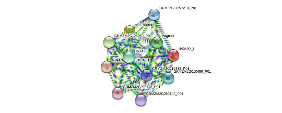 cl43400_1 protein (Zea mays) - STRING interaction network