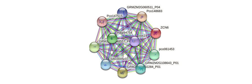 ZCN6 protein (Zea mays) - STRING interaction network