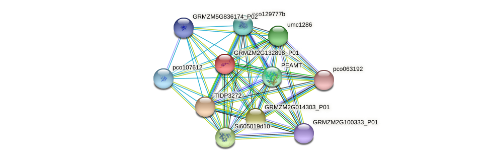 GRMZM2G132898_P01 protein (Zea mays) - STRING interaction network