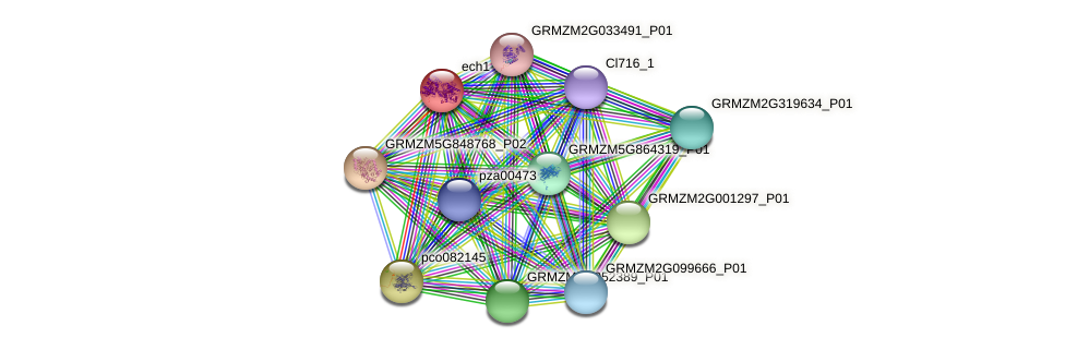 Zm.80866 protein (Zea mays) - STRING interaction network