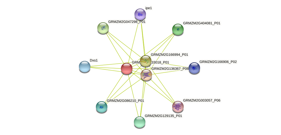 GRMZM2G133018_P01 protein (Zea mays) - STRING interaction network