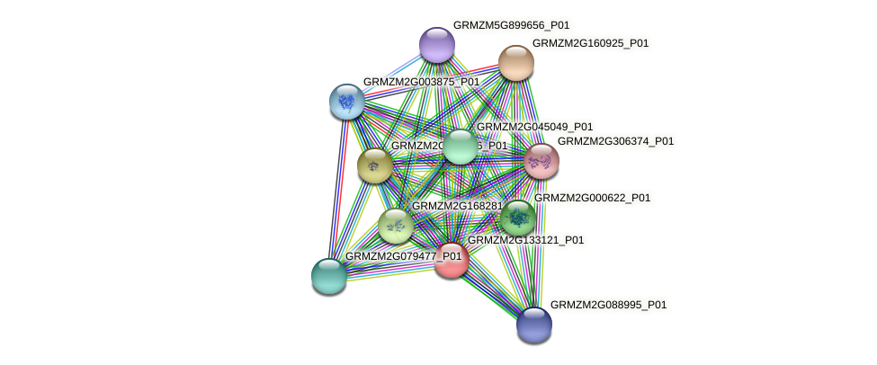 GRMZM2G133121_P01 protein (Zea mays) - STRING interaction network